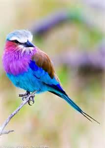 colorful bird 1000 ideas about small birds on bird toys