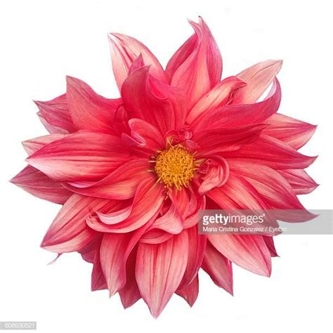 Flower Up flowers stock photos and pictures getty images