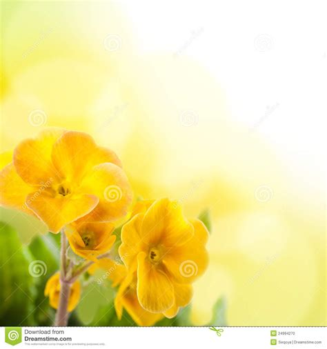 Yellow Wedding Background Images by Yellow Flowers On A White Background Stock Photo Image