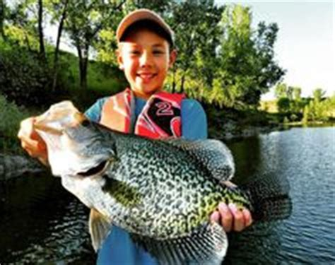 crappie images crappie fishing fish  fishing