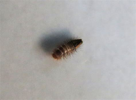 Insekten Im Haus Haus Design Und M 246 Bel Ideen