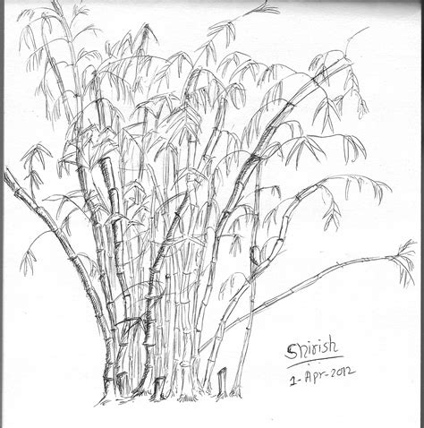 Drawing Of A Bamboo Tree by Monocrome Hues And Tones