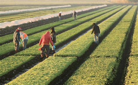 crop insurance important for ag industry washington ag florida agriculture is growing strong farm flavor
