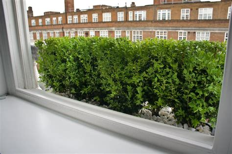 Hedge In Planter Boxes by Window Boxes Design Installation Maintenance
