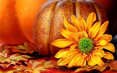 pumpkin background hd pumpkin wallpapers wallpaper cave