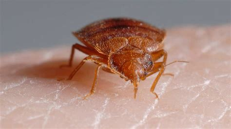 scientific insect control bed bugs  chagas disease