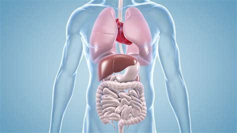 die innere medizin top 10 facharztausbildung operation karriere