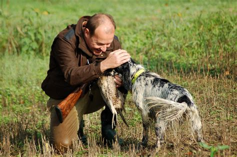 alimentazione cani da caccia migliori mangimi per cani archivi mangimi per cani da