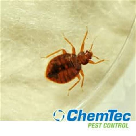 Do Bed Bugs Carry Disease 28 Images New Bed Mites Bites Interior Design And Home