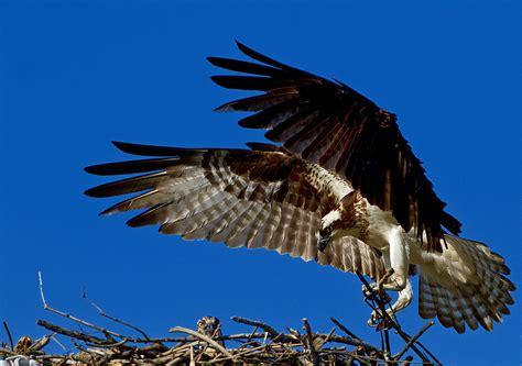 Jakes Discerning Eye by East Massachusetts Nature