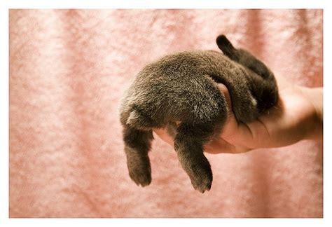 Home Decor Blogs Cape Town sugar spice design sleepy bunny