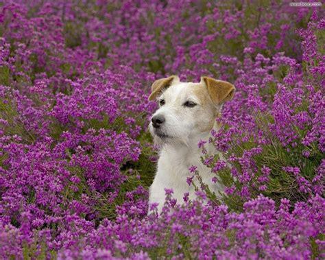 fiori di bach x cani i fiori di bach page 109 of 111