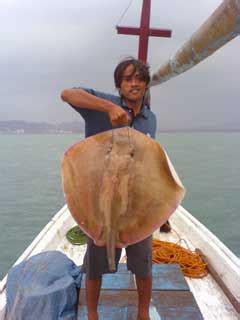 Paku Fisher Press Pelabuhan Paku Banten Fisher