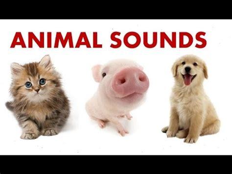 animal sounds  children  learn  youtube