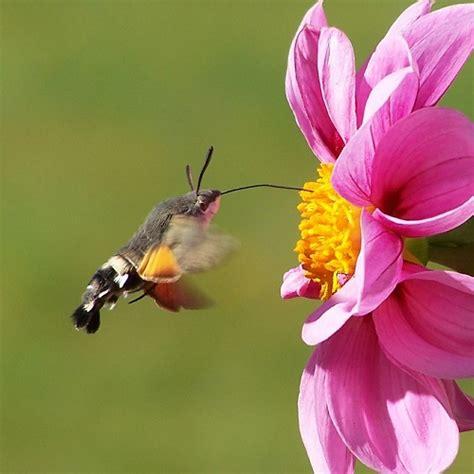 il giardino delle farfalle il giardino delle farfalle quali piante scegliere