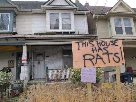 signs of rats in house rat infested house frustrates riverdale ave residents the fixer toronto star