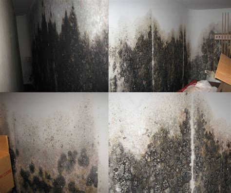 mold in basements how waterproofing your basement kills mold on the with basement solutions