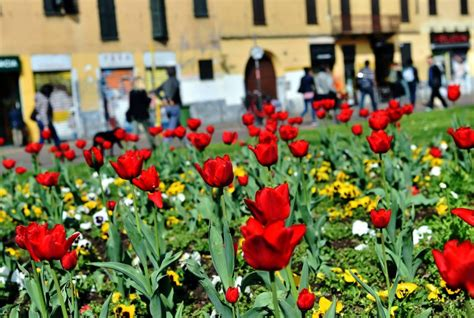 tappeto di fiori primavera un tappeto di fiori colorati davanti alla