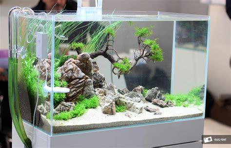 aquascape mini cupang inspirasi aquascape mini di rumah cara budidaya ikan