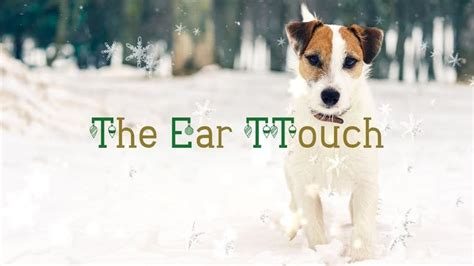 ttouch for dogs day 18 the ear ttouch greyt ttouch