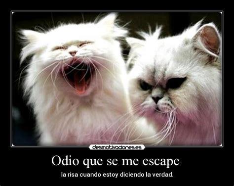 imagenes geniales de gatos im 225 genes y carteles de gatos desmotivaciones