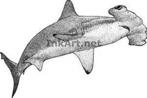 scalloped hammerhead shark rhina ancylostoma line art