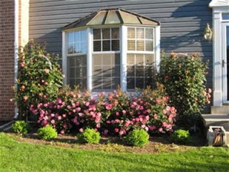Bay Window Garden Ideas Landscape Labor Solutions Give Knock Out Roses A Try This