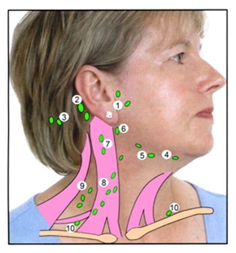 lymph node diagram neck patient information leaflets pils association