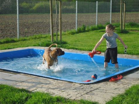 backyard dog pool 10 best images about dog pools on pinterest dog pools