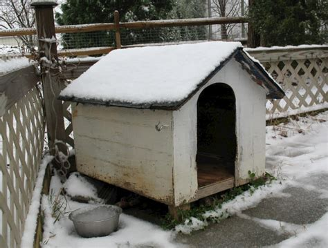 insulated dog houses for winter how to build a remarkable diy dog house 21 free plans