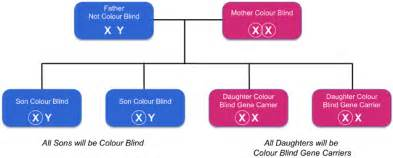cause of color blindness inherited colour vision deficiency colour blind awareness