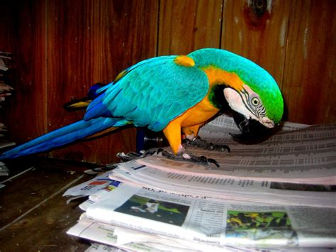 macaws melbourne avian rescue sanctuary