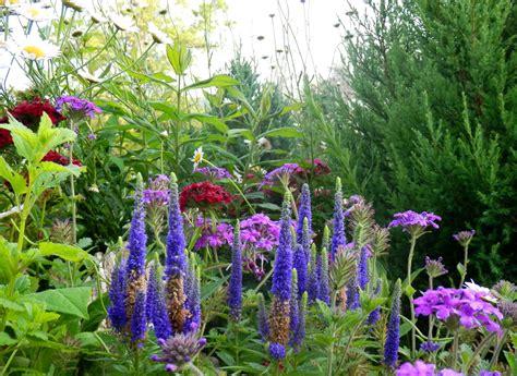 Summer Flowers Have Arrived Living In The Blue Ridge Garden Ridge Flowers