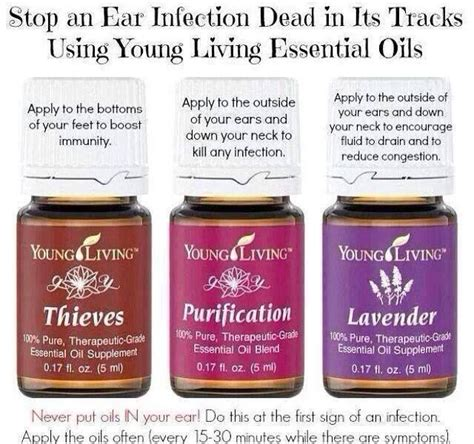 essential oils for ear infection ear infections living essential oils