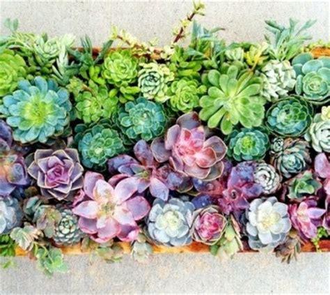 Bild Mit Echten Pflanzen by Blumendekoration Lebendige Wanddekoration Aus Blumen Und