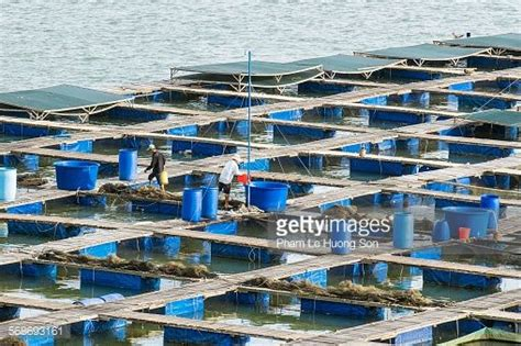 Pemberi Pakan Udang Otomatis aqua spark ideosource danai efishery swa co id