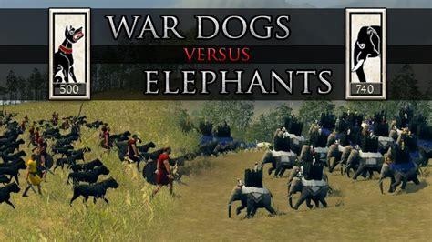 like war dogs total war rome ii war dogs vs elephants
