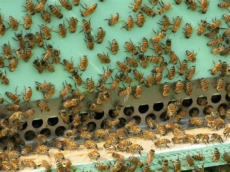 bees in the backyard here s the colony killing mistake backyard beekeepers make