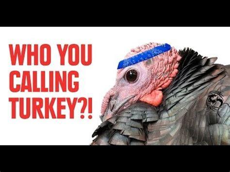 bad türkis facts that prove turkeys are badass