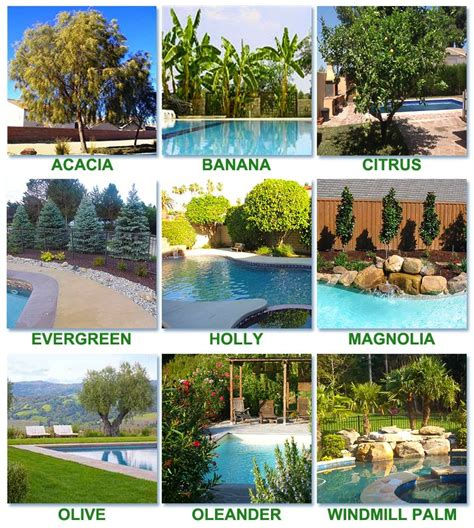 landscaping around a pool best 25 pool landscaping ideas on backyard