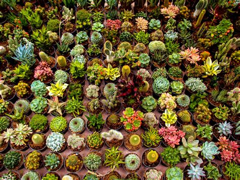 succulent facts browse succulents by genus world of succulents