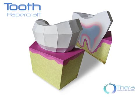 Learn Paper Craft - science paper model tooth free papercraft papermodeler