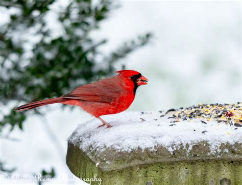 birds pictures birds in the snow emily carter mitchell nature