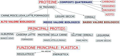 alimentazione proteine macronutrienti le proteine anche in polvere