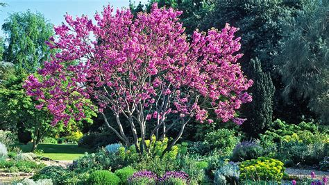 joe swift the best blossom trees for a small garden