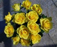 significato dei fiori gialli fiori gialli il loro significato e i bouquet pi 249 belli