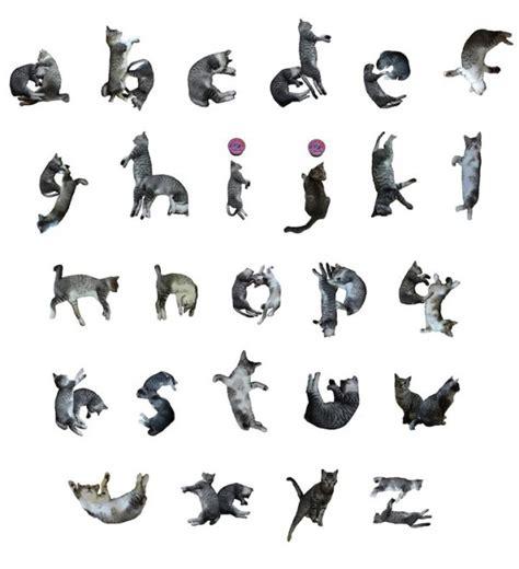 generatore di parole con lettere giappone l alfabeto felino gatti al posto delle lettere