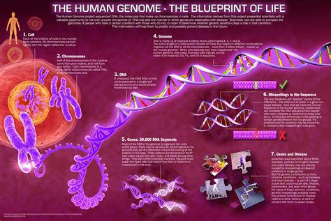 The Genome the age of the genome 4 histories of things to come