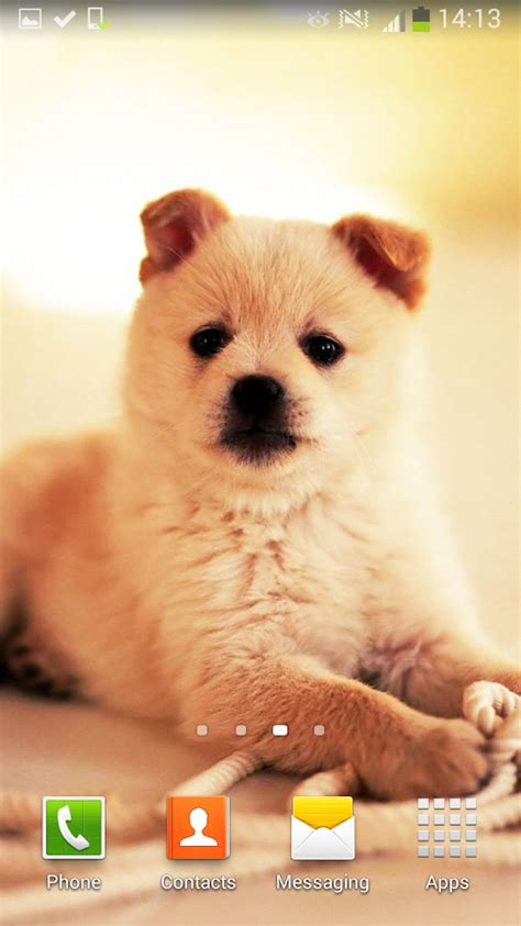dog wallpapers apps on google play cute dogs live wallpaper android apps on google play