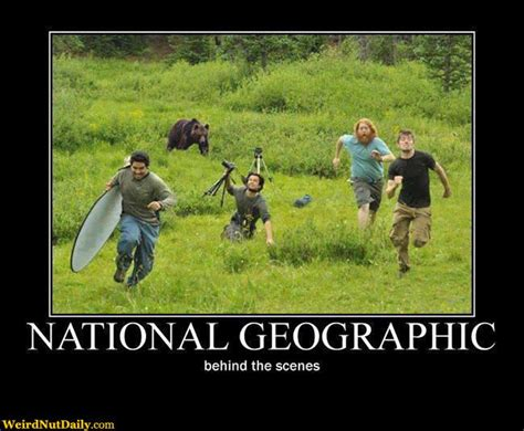 Running Bear Meme - funny pictures weirdnutdaily national geographic